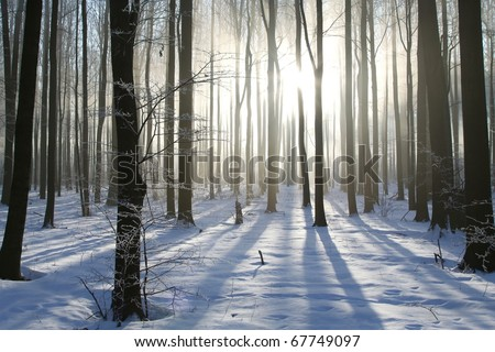 Misty winter woods at dawn. Photo taken in December.