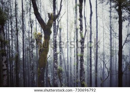 Misty woods #730696792