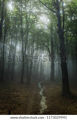 Misty woods with water path between the trees and moody atmosphere