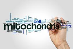 Mitochondria word cloud concept