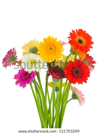 Mix gerber flowers isolated on white background