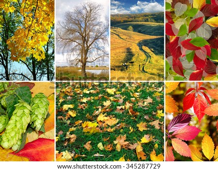 mix of different autumn photo closeup #345287729