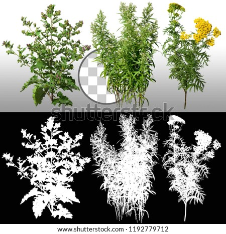 Mix of plants and wild flowers isolated on a transparent background via an alpha channel of great precision. High quality mask without unwanted edge. High resolution for professional composition.