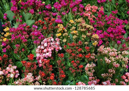 mix of sedum flower in gardan