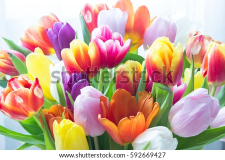 Mix of tulips flowers near the window #592669427