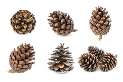 Mix Pine cone isolated on white background