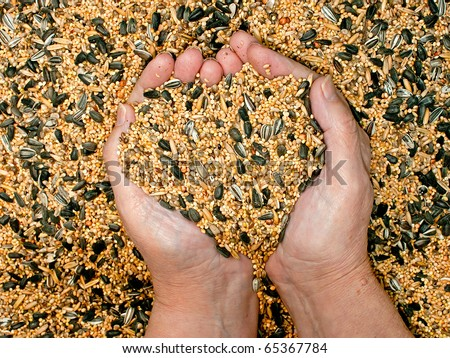 Mixed bird food held by woman hands, shaping a heart