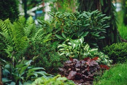 mixed border with shady tolerance plants - ferns, hostas and heucheras in summer garden