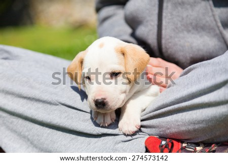 Mixed-breed adorable cute little puppy petting in a lap of a female owner, outdoors on a meadow on a sunny spring day.