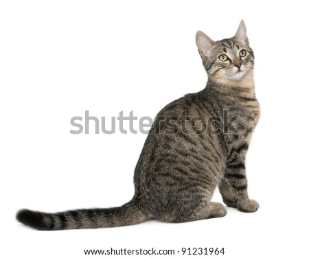 Mixed-breed cat, Felis catus, 6 months old, sitting in front of white background