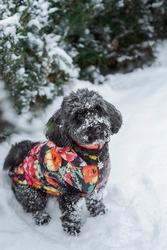 Mixed breed cute dog sitting near fur-tree