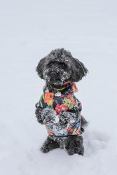 Mixed breed cute dog sitting pretty in the snow