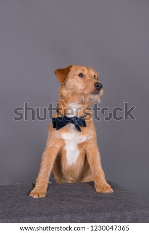 mixed breed dog #1230047365