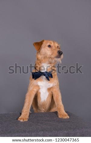 mixed breed dog #1230047365