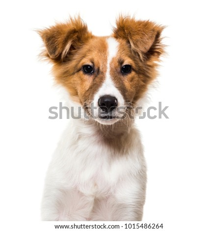 Mixed-breed dog against white background #1015486264
