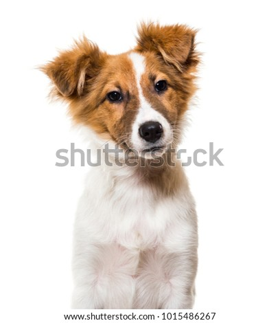 Mixed-breed dog against white background #1015486267