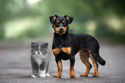 mixed breed dog and kitten posing outdoors