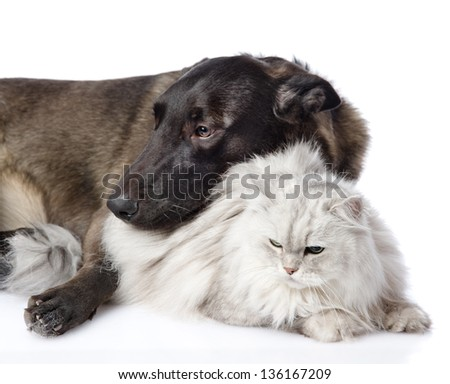 Cat Dog Breed Mix Mixed Breed Dog And Persian