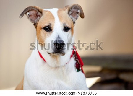 Mixed Breed Dog at Attention in a Natural Outdoor Setting