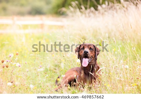Mixed Breed Dog Enjoying Outdoors on Nice Day #469857662