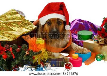 Mixed breed dog has done preparations for christmas