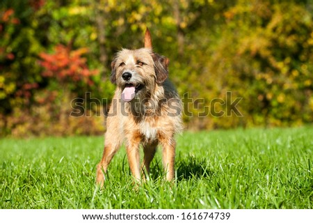 Mixed breed dog in nature #161674739