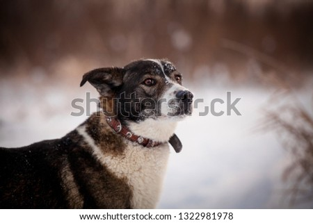 Mixed breed dog in the winter field #1322981978