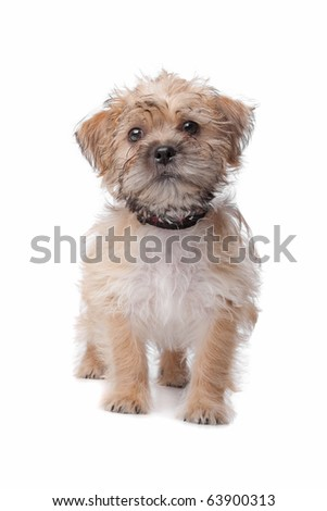 mixed breed dog isolated on a white background #63900313