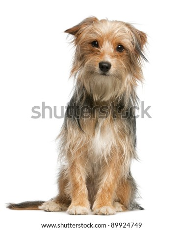 Mixed-breed dog, 12 months old, sitting in front of white background - stock photo