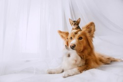 mixed breed dog posing with a kitten on his head and a rabbit