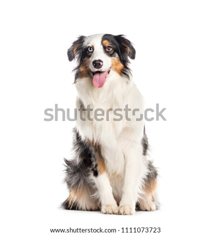 Mixed-breed Dog sitting in front of white background #1111073723