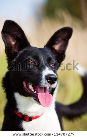 Mixed-breed dog smiling