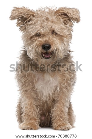 Mixed-breed dog, 6 years old, with mouth open in front of white background