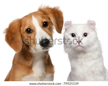 Mixed-breed puppy, 4 months old and a American Curl cat, 1 and a half years old, in front of white background - stock photo