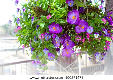 Mixed flowers in a hanging basket.