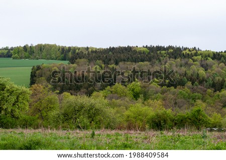 mixed forest in different green shades in spring landscape in swabian alb on a rainy day Imagine de stoc ©