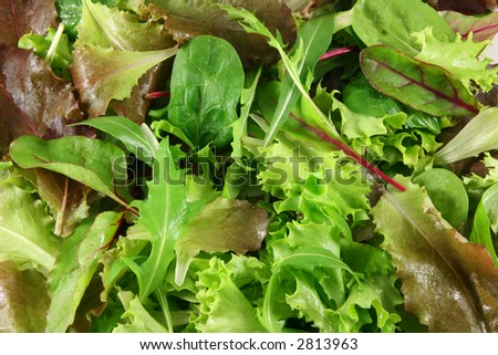 Mixed lettuces closeup