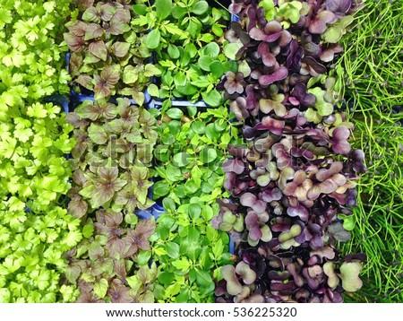 Mixed Microgreens