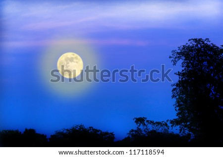 Mixed moon on birch silhouette.