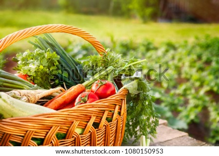 Mixed organic vegetables and wicker basket on wooden table #1080150953