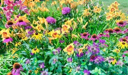Mixed Perennial Flower Bed Background