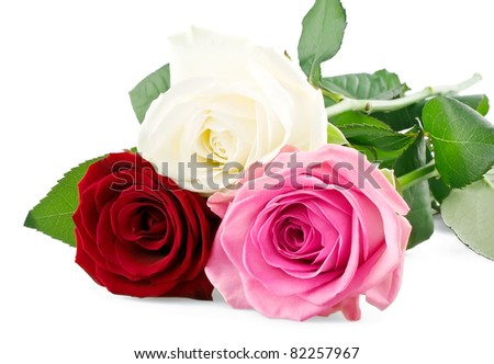 Mixed roses isolated on white background