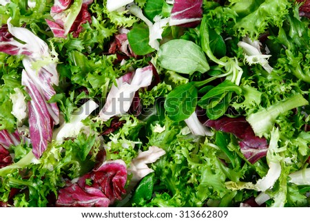 Mixed salad leaves  frisee, radicchio and lamb\'s lettuce. Background, texture.
