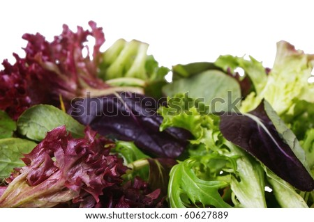 Mixed salad loose lettuce and spinach  leaves