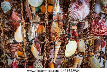 Mixed sea shells as background, sea shells collection.