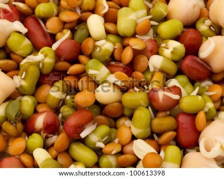 Mixed sprouted beans - stock photo