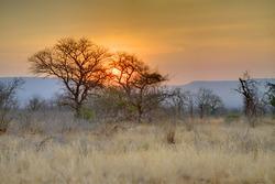 MKUZE SUNSET. Sun sets over Sand Thorn Forest in Zululand, Kwazulu Natal, South Africa