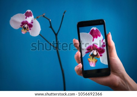 Mobile photography concept. Woman hand holding smartphone and taking photo of violet orchid flower on bright blue background. Nature concept. Place for your inscription.