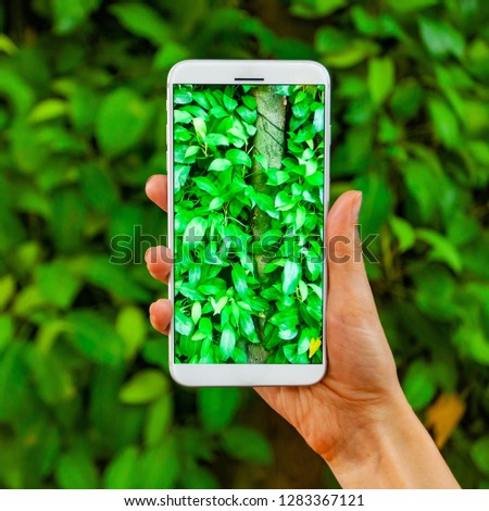 Mobile photography concept. Woman hand holding smartphone and taking photo of violet orchid flower on bright blue background. Nature concept. Place for your inscription #1283367121