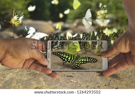 Mobile smartphones are taking pictures of butterflies in the spring.